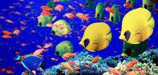 ما هي عقوبة صيد أسماك الزينة من المياه البحرية دون ترخيص؟ 2022